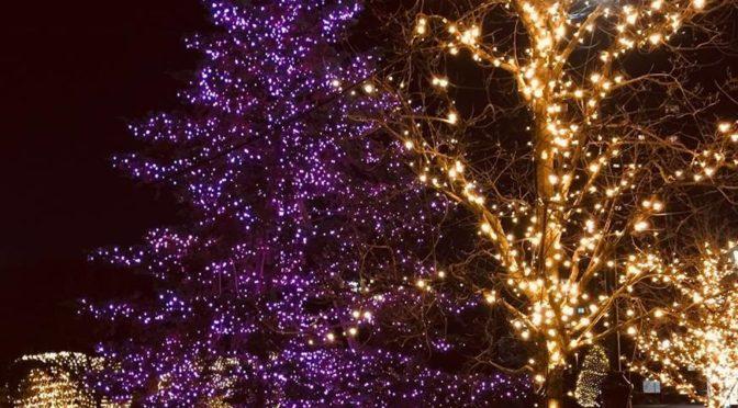 来週はサロン・レジーナでクリスマス会!!